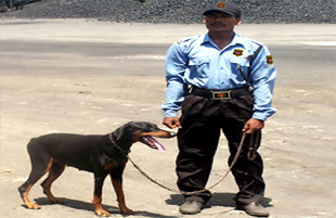 Security Guard Services Provider